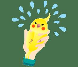 Lovely & Cute Cockatiels! sticker #1368060