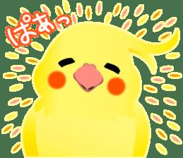 Lovely & Cute Cockatiels! sticker #1368072
