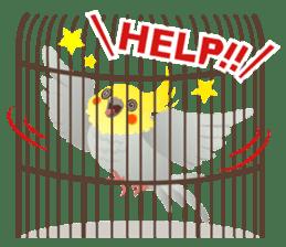 Lovely & Cute Cockatiels! sticker #1368073