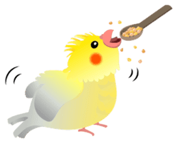 Lovely & Cute Cockatiels! sticker #1368078