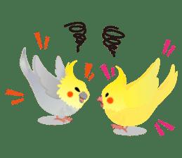 Lovely & Cute Cockatiels! sticker #1368080