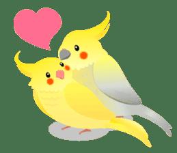 Lovely & Cute Cockatiels! sticker #1368081