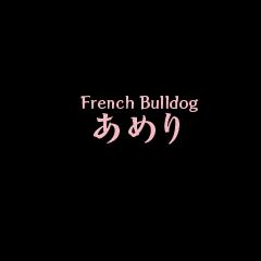 Life of French Bulldog Amelie