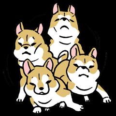 Mammals   Dog family   Shiba