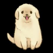 สติ๊กเกอร์ไลน์ The Golden Retriever Puppy!