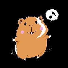 kawaii guinea pig Koo-chan