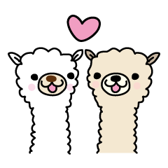 Three friends alpacas
