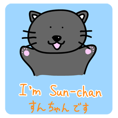 a bilingual cat Sun-chan