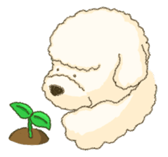 White Poodle (fixed) sticker #1501342