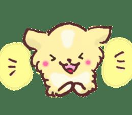 Chihuahua peek from gap sticker #1521208
