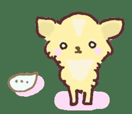 Chihuahua peek from gap sticker #1521210