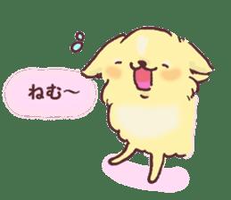 Chihuahua peek from gap sticker #1521215