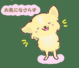 Chihuahua peek from gap sticker #1521217