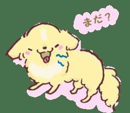 Chihuahua peek from gap sticker #1521219