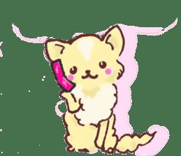 Chihuahua peek from gap sticker #1521226
