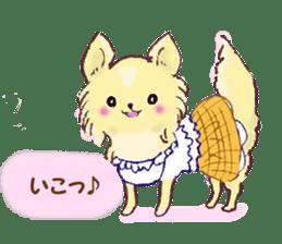 Chihuahua peek from gap sticker #1521228