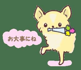 Chihuahua peek from gap sticker #1521234