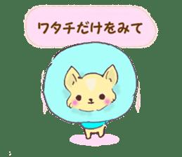 Chihuahua peek from gap sticker #1521246