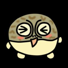 Peetarou of Namaqua Rain Frog