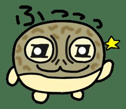 Peetarou of Namaqua Rain Frog sticker #1549262