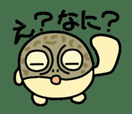Peetarou of Namaqua Rain Frog sticker #1549272