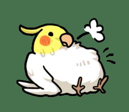 Lutino cockatiels sticker #1551298