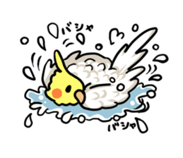 Lutino cockatiels sticker #1551301