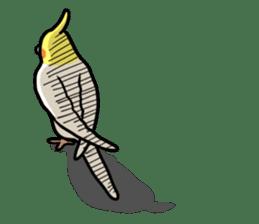 Lutino cockatiels sticker #1551302