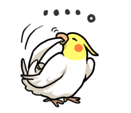 Lutino cockatiels sticker #1551311