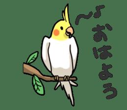 Lutino cockatiels sticker #1551313
