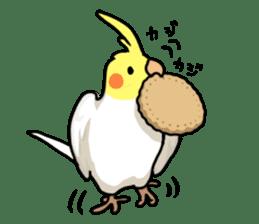 Lutino cockatiels sticker #1551319