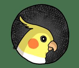 Lutino cockatiels sticker #1551328