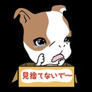 สติ๊กเกอร์ไลน์ Baby bulldog