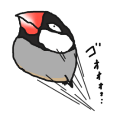 Evil eyes Java sparrow
