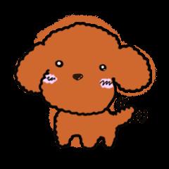 Love Poodle