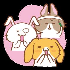 Three talking pretty rabbits