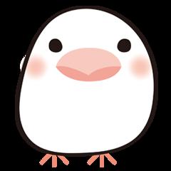 white little bird