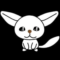 SHIRO of a fennec fox