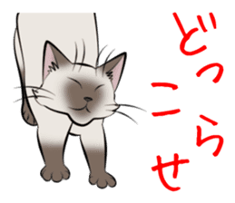Gesture of a cat sticker #1895046