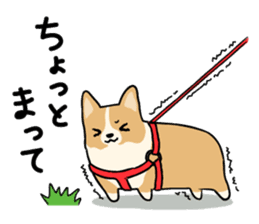 Pembroke Welsh Corgi sticker #1925824