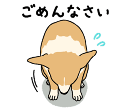 Pembroke Welsh Corgi sticker #1925850
