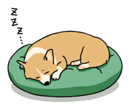 Pembroke Welsh Corgi sticker #1925860