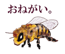 Sticker of insects sticker #1944799