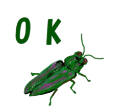 Sticker of insects sticker #1944813