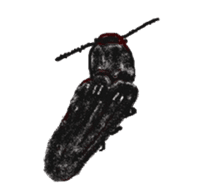 Sticker of insects sticker #1944832
