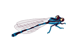 Sticker of insects sticker #1944836