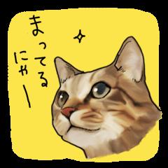 "Futaro The Cat ""Okawari"""