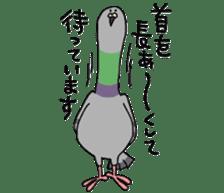 Pigeon 2 sticker #2040997