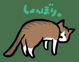 The Sticker of my cat sticker #2120228