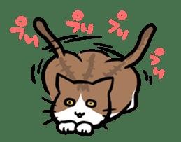 The Sticker of my cat sticker #2120254